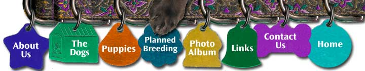 Kendian Kennels Field Spaniel Planned Breedings Menu